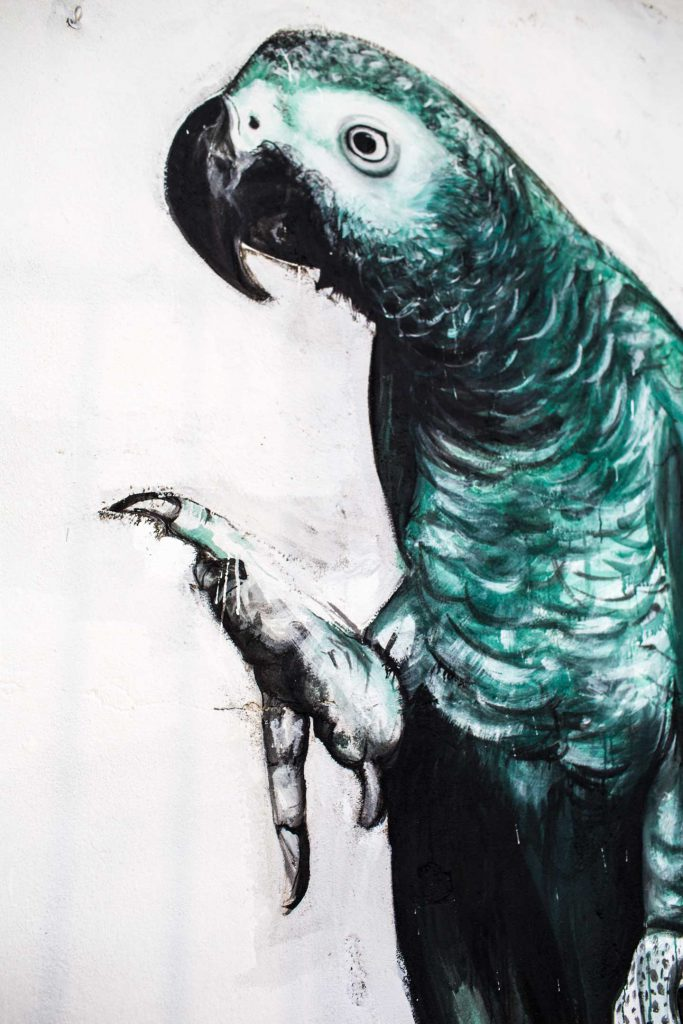 Parrot_Chagall